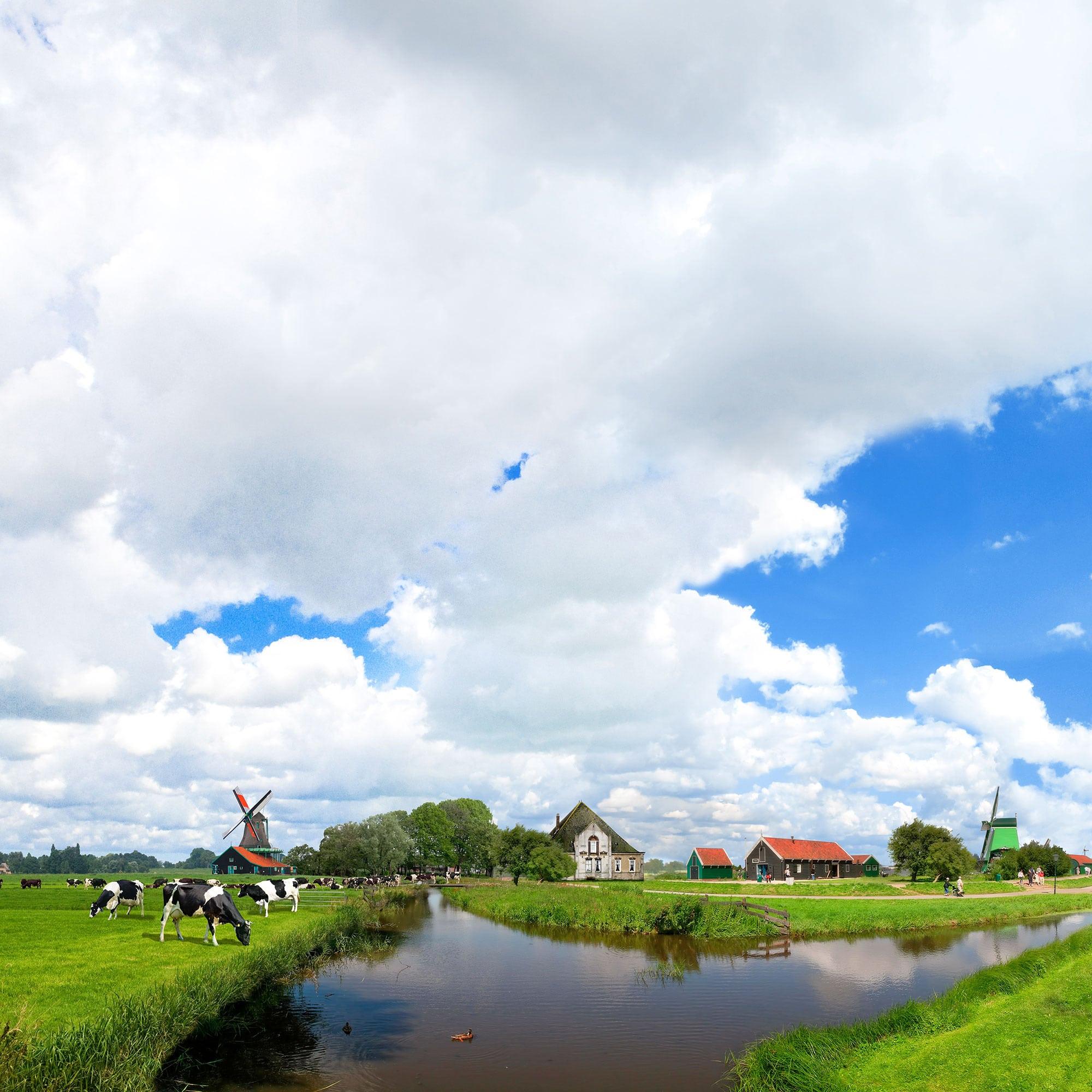 Koggenlandse uitgelicht | Koggelandse - Noord-Hollandse kaas